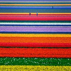 The Netherlands--Go in April/May to see these fields!