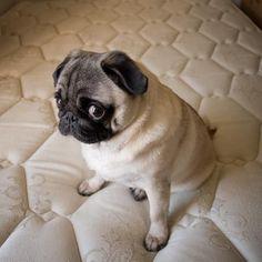 That face! #pugs I L