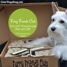 Furry Friends Club P