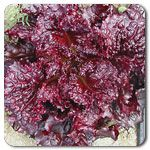 Organic Galactic Lettuce  This is gorgeous!