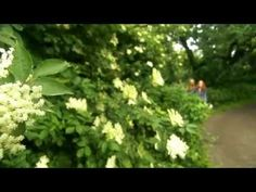 Edible Garden - Flowers and Herbs. Episode 5 of 6  Alys Fowler.  Love this!