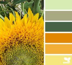 sunny hues 09.14.14