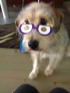 Bocci is a fan of #ArloNeedsGlasses too! So cute