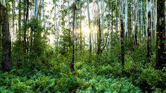 Hawaii- The Jungle in Kauai