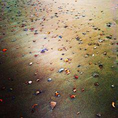 Shell Beach, Tybee Island