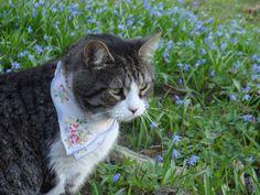 a kerchief wearing cat