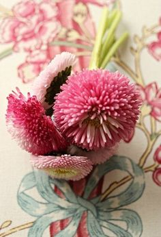 Pink Bachelor Buttons