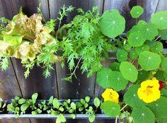 The Easiest Urban Garden? Gardenista