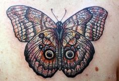 Autumn Butterfly by David Hale