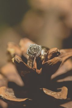 ring shot idea (pinecone) - Lake Placid Winter Wedding captured by Tree of Life Films - via ruffled