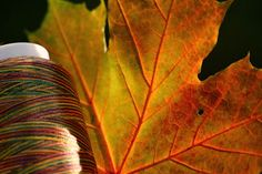 machinequilter - capture the autumn beauty with Superior Threads - perfect for machine quilting
