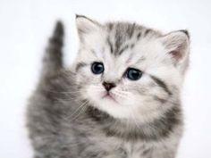 kitties.... animal lovers, kitty cats, pet, kitti cat, ador anim, desktop wallpapers, kittens, baby cats, animal photos