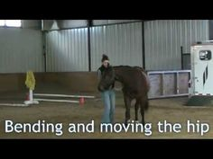 ▶ Horse Training: Groundwork checklist, what every horse should know.. - YouTube