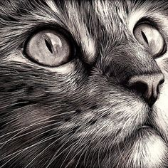 cat faces, realistic cat drawing
