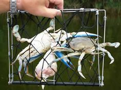 Pinterest discover and save creative ideas for Fishing pole crab trap