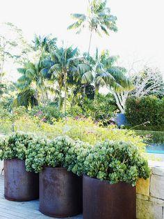 bronze planters