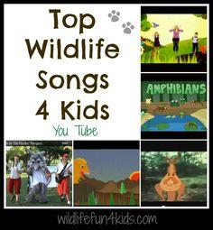 Top wildlife songs