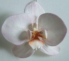Gumpaste Moth Orchid Tutorial