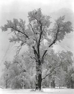 Google Image Result for http://sarahmlangdon.files.wordpress.com/2010/01/oak-tree-snowstorm1.jpg