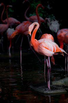 flamingo . . .