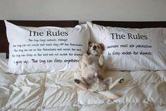 anim, dogs, funni, bed, pet
