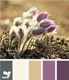 #Purple and tan, white, blue grey. Color Inspiration by #DesignSeeds.  If you like this color scheme, I can select your #paint colors.