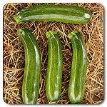 Organic Cha-Ching F1 Hybrid Zucchini