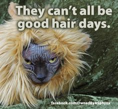 They can't all be good hair days. http://facebook.com/OwnedByASphynx