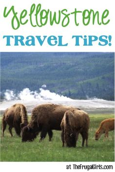24 Fun Things to See and Do at Yellowstone National Park! ~ from TheFrugalGirls.com ~ you'll love all these fun tips for your next vacation or trip to the park! #yellow #stone #nationalparks #thefrugalgirls