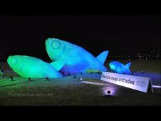 Extreme Plastic Recycling Ideas | Plastic Bottle Fish, Rio de Janeiro | Eurocell - YouTube