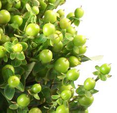 {Bridal Bouquet/Bridesmaids bouquets} Green Hypericum Berries