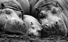 Innate Beauty of Majestic Wildlife Creatures - My Modern Met