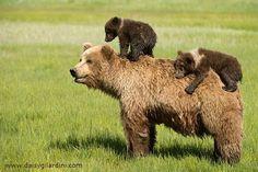Mama bear!