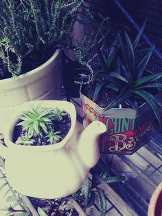 I love my plants!