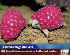 Research Shows Turtles are Still Slower.