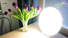 Bright-light therapy is almost twice as effective as Prozac (fluoxetine) in treating major depression.