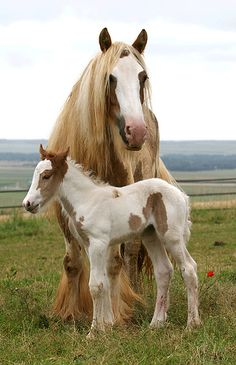 Me and my muddy mom. - horse with colt