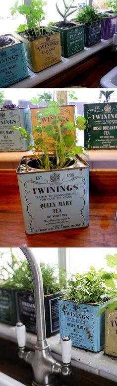 Tea tins turned herb garden