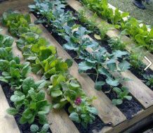 Pallet Garden to cut down on weeds