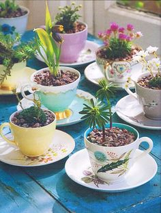 teacup planter, kid activities, drink, bulb, tea cup gardens, kid winter, teacup gardens