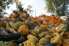 Rombach Farms Pumpkin Patch
