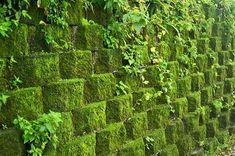 File:Taiwan 2009 JinGuaShi Historic Gold Mine Moss Covered Retaining Wall FRD 8940.jpg