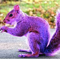 Purple Peanut!!!