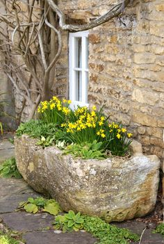 stone planter with yellow flowers