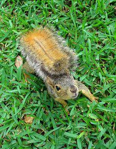 Squirrel closeup by rustyrabbit, via Flickr