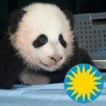 Smithsonian Zoo on Instagram