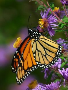 Beautiful Butterfly - Pretty Colors