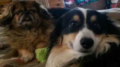 Jasper & Django