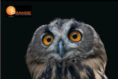 """The """"Eyes"""" Have It: Twelve Considerations for Statistics in eDiscovery - http://bit.ly/eDDStatistics.    Orange Legal Technologies helps corporate legal departments and their outside counsel conduct the critical electronic discovery task of document review by providing advanced predictive coding technologies and expert reviewer assistance to accelerate the electronic discovery process. To learn more about Orange Legal Technologies, visit http://www.orangelt.com. (@OrangeLT)"""