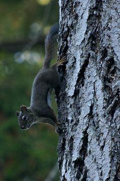 Cute #squirrel